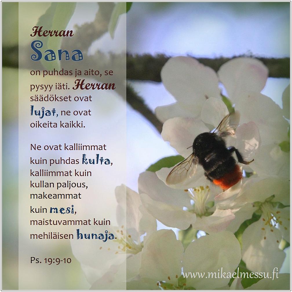 Sana_hunaja_MM